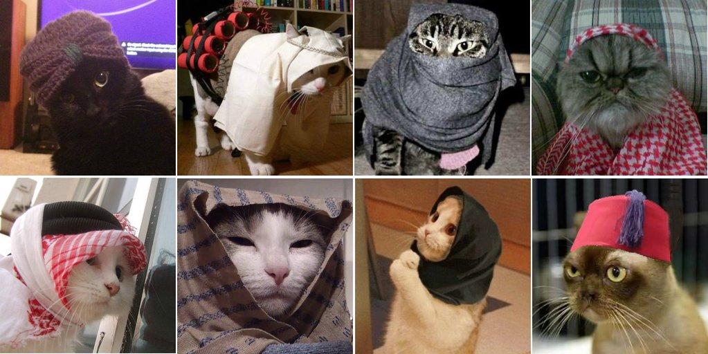 i gattini di bruxelles